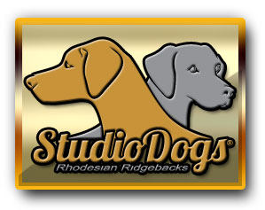 Studios Its Crazy Wild Times