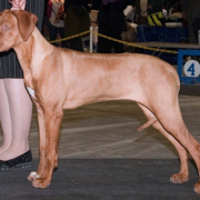 Rhodesian-Ridgeback-Studios-Coldfoot-Campaign-by-Freedom-6mos